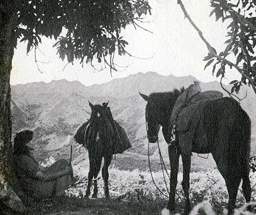 Liv-Heyerdahl