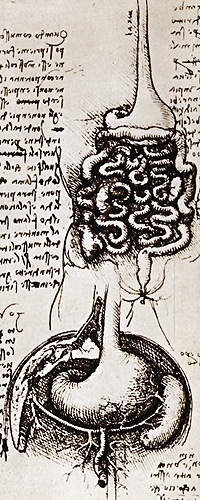Da Vinci Magen-&-Darm