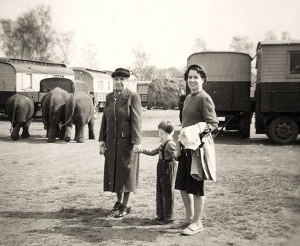 Elefanten-Uelzen