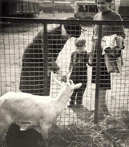 erste-Ziegen